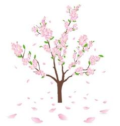 flowering tree vector image