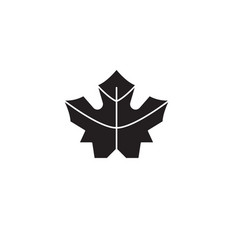 maple leaf black concept icon maple leaf vector image