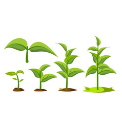 Saplings sprouts growth stages drawings vector