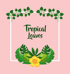 tropical leaves hibiscus flower botanical vector image