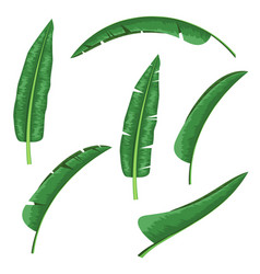 banana leaf design element for tropical theme vector image