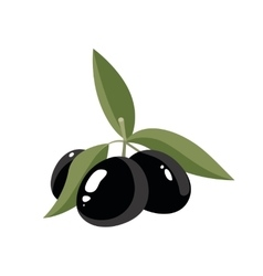 black Olives with leafs vector image