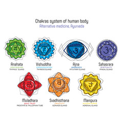 Chakras system with glands vector