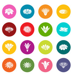 detailed flower icons set colorful circles vector image