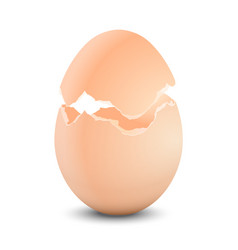 Egg shell broken vector