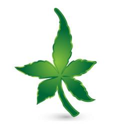 Marihuana leaf logo vector