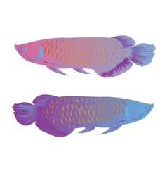 arowana fish isolated colorful vector image