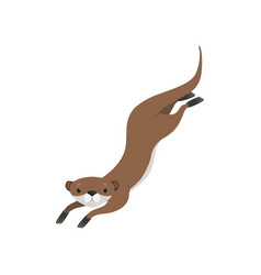 lovely brown otter swimming funny animal vector image