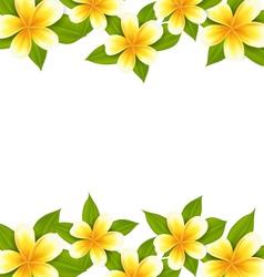 Decoration frame made in frangipani plumeria vector image vector image
