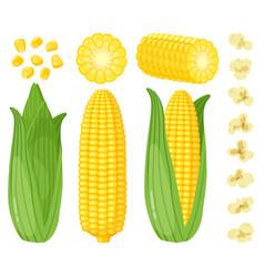 cartoon corn maize vegetables golden sweet corn vector image