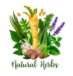 Natural herbs and green organic seasonings spices vector