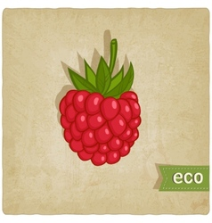 raspberries eco background vector image