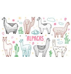 Set of cute alpaca llamas or wild guanaco on the vector