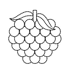 bunch grape fresh fruit vitamin nutrition vector image