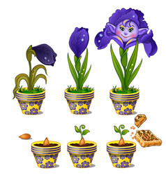 growth of magical flower with human face vector image