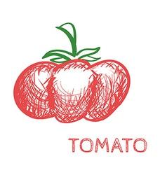Hand Drawn Tomato Sketch vector