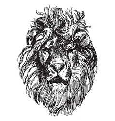 Lion head is a painting by paul meyerheim vintage vector