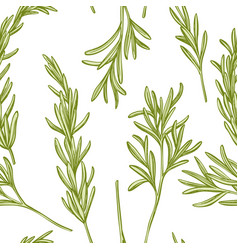 seamless pattern with hand drawn pastel rosemary vector image