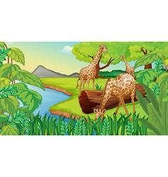 Three giraffes at the riverside vector