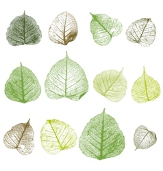 leafs isolated vector image