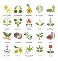 set of herbs and plants color flat icons used in vector image vector image