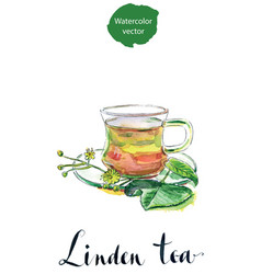 cup of healthy linden tea and flowers vector image vector image