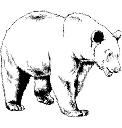 Bear drawn with ink from hands vector