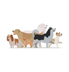 Collection of Different Dogs Isolated on White vector image