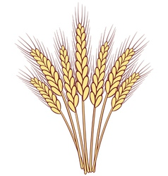 wheat ears vector image