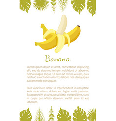 banana exotic juicy ripe yellow fruit vector image