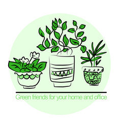 cute pots with blloming housplants vector image