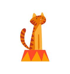 Cute tiger sitting on pedestal animal performing vector