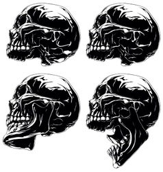 Detailed graphic skull in profile projection set vector image