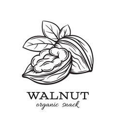 Hand drawn walnut vector
