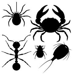 Invertebrata vector image