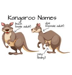 kangaroo and body part vector image