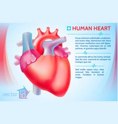 medical organ poster vector image