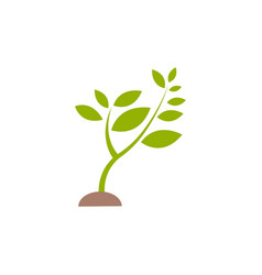 plant sprout graphic design template isolated vector image