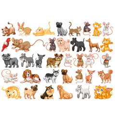 set pet character vector image