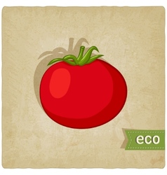 Tomato eco background vector