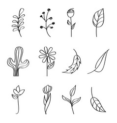 flowers cactus leaves branch berries outline image vector image