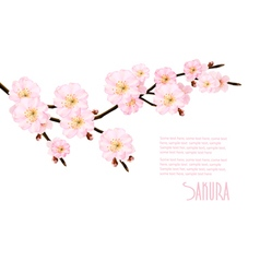 Spring nature background with blossoming sakura vector image vector image
