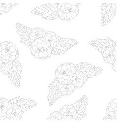 begonia flower picotee outline on white background vector image