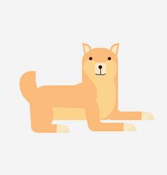 Cute cartoon japanese shiba inu dog flat shiba vector