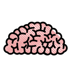 drawing brain human organ memory vector image