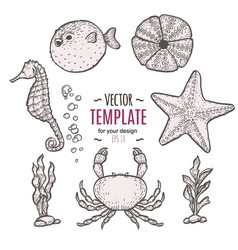 hand drawn sea life sketch template vector image