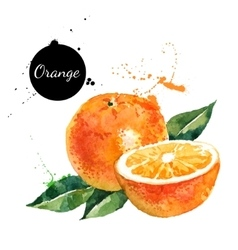 Hand drawn watercolor painting orange on white vector