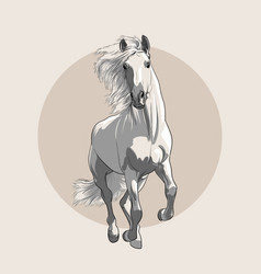horse in motion with a mane hand sketch vector image