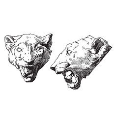 Panther head is shown from its front and side vector