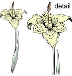 tiger flower vector image